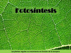 Fotosíntesis en las plantas