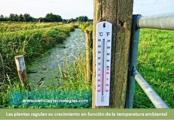 Temperatura y las plantas