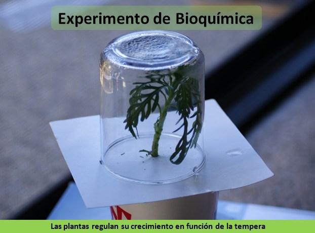 Transpiración de las plantas