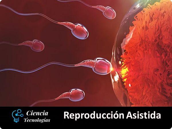 Reproducción Asistida Espermatozoides llegando al Óvulo