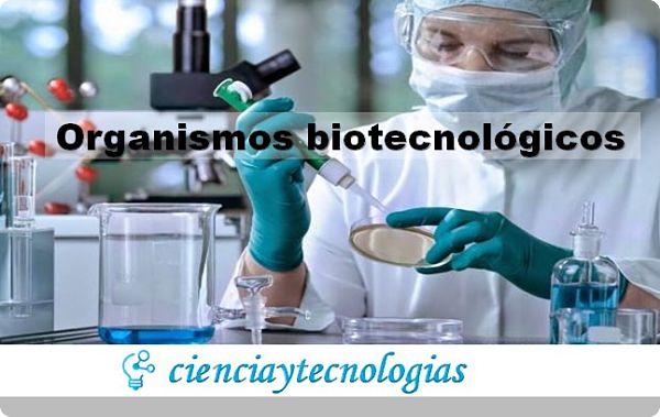 Organismos Biotecnológicos consideraciones para el futuro
