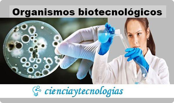 Organismos Biotecnológicos y sus avances tecnológicos