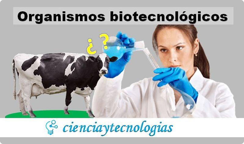Organismos Biotecnológicos en la producción de queso sin vacas