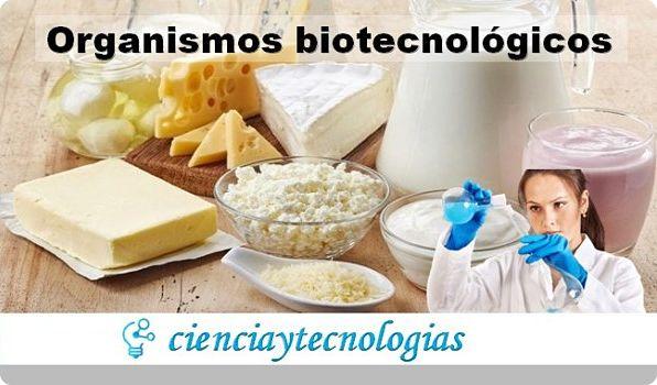 Ventajas del uso de organismos biotecnológicos
