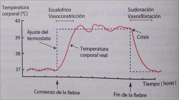 cuando la termorregulación falla, Relaciòn entre el punto de ajuste del termostato hipotalàmico y la temperatura corporal